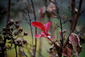 red leaves among the gray