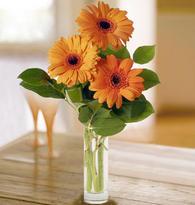 cheap sympathy flowers